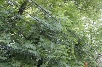 Упало дерево на провода на ул. Оборонной, Фото: 1