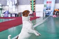 Выставка собак в Туле 26.01, Фото: 44