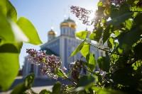 Яблони у кремля, Фото: 8