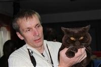 В Туле прошла международная выставка кошек, Фото: 47