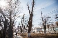 Деревья, кронированные три года назад., Фото: 1