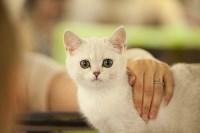 """Выставка """"Пряничные кошки"""". 15-16 августа 2015 года., Фото: 96"""