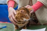 Выставка кошек в Туле, Фото: 24