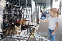 III благотворительный фестиваль помощи животным, Фото: 1