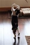 Коты в балете, Фото: 1