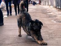 Дворняги, дворяне, двор-терьеры: 50 фото самых потрясающих уличных собак, Фото: 24