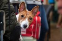 Всероссийская выставка собак 2017, Фото: 24