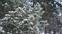 Мотороллер «Алексей Геннадьевич» из Тулы установил рекорд скорости на «Байкальской миле», Фото: 35