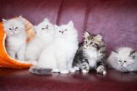 """Выставка """"Пряничные кошки"""". 15-16 августа 2015 года., Фото: 57"""