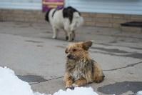 Крематорий для собак в Венёве, 24.03.2016, Фото: 53