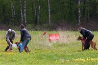 В Туле состоялись собачьи бега, Фото: 27