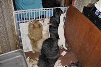 Похищенные собаки, Фото: 12