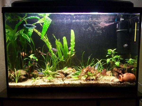 Моя гордость-мой аквариум!