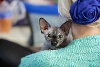 В Туле прошла выставка «Пряничные кошки» , Фото: 12