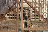 Дворняги, дворяне, двор-терьеры: 50 фото самых потрясающих уличных собак, Фото: 28
