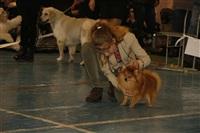 В Туле прошла всероссийская выставка собак, Фото: 18