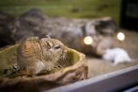 Тульский экзотариум: животные, Фото: 45