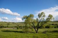 Тишина, солнце и бесконечный простор: 90 красивых фото с родины слонов – Одоевского района, Фото: 26