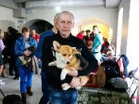 Выставка собак в Туле, Фото: 4