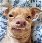 Самая фотогеничная собака, Фото: 1