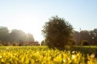 Центральный парк, утро, осень, Фото: 34