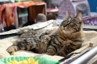 """Выставка """"Пряничные кошки"""" в ТРЦ """"Макси"""", Фото: 87"""
