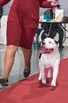Выставка собак в Туле 26.01, Фото: 36
