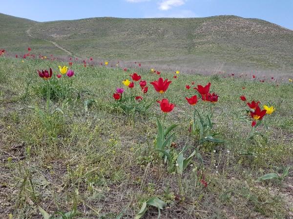 Природная красота майской Астраханской степи