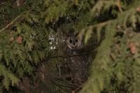 В Привокзальном районе поселились ушастые совы, Фото: 3