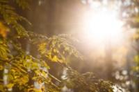 Центральный парк, утро, осень, Фото: 26