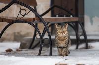 Тульские котики, Фото: 38