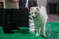 Выставка собак в Туле, Фото: 78