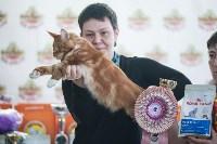В Туле прошла выставка «Пряничные кошки» , Фото: 51