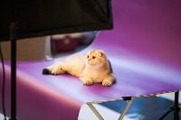 """Выставка """"Пряничные кошки"""". 15-16 августа 2015 года., Фото: 6"""