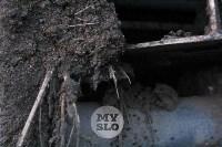 Свалка куриного помета Торхово, Фото: 10