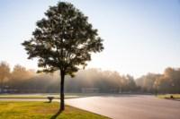 Центральный парк, утро, осень, Фото: 51