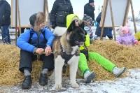 Праздник северных собак на Куликовом поле , Фото: 96