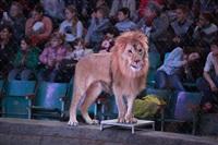 Новая программа в Тульском цирке «Нильские львы». 12 марта 2014, Фото: 23