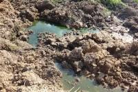 Отравленный пруд в Апасово, Фото: 4