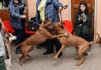 """Выставки собак в ДК """"Косогорец"""", Фото: 50"""
