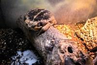 Тульский экзотариум: животные, Фото: 12