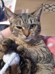 Тульские коты, которых достали хозяева на самоизоляции, Фото: 1