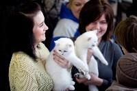Выставка кошек. 4 и 5 апреля 2015 года в ГКЗ., Фото: 134