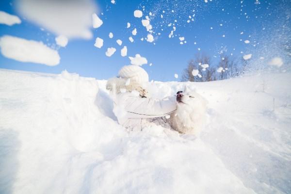 сНежные ванны :)) (Тульская область, д.Баскаково, 10 января 2015)