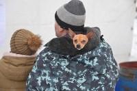 Праздник северных собак на Куликовом поле , Фото: 1