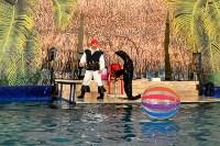 Шоу карибских дельфинов, Фото: 13