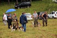Выставка охотничьих собак под Тулой, Фото: 36
