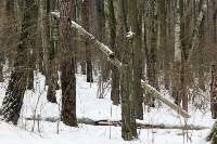 В Тульской области охотнадзор патрулирует леса на новой технике, Фото: 5