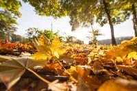 Золотая осень в Тульской области, Фото: 57