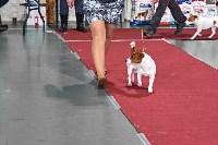 Выставка собак в Туле 26.01, Фото: 12